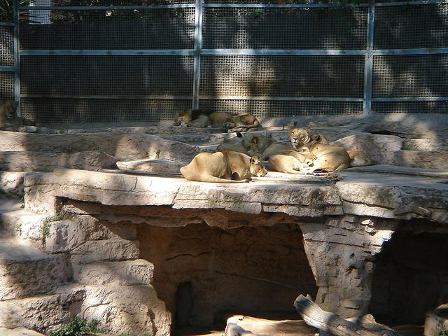 barcelone-zoo