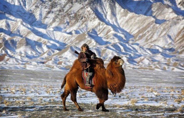 desert de gobi, mongolie