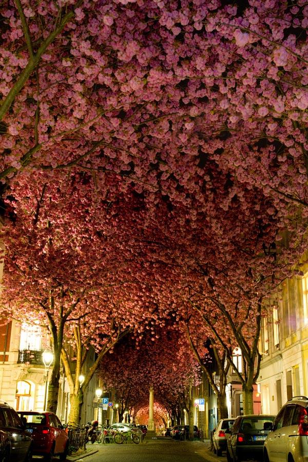 Rue fleurie Bonn Allemagne