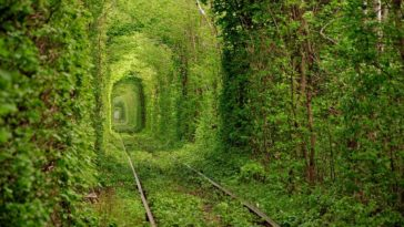 Tunnel of love - Tunnel de l'amour Klevan, Ukraine
