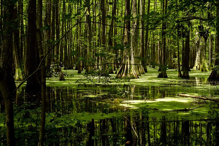 Chicot-State-Park-en-Louisiane