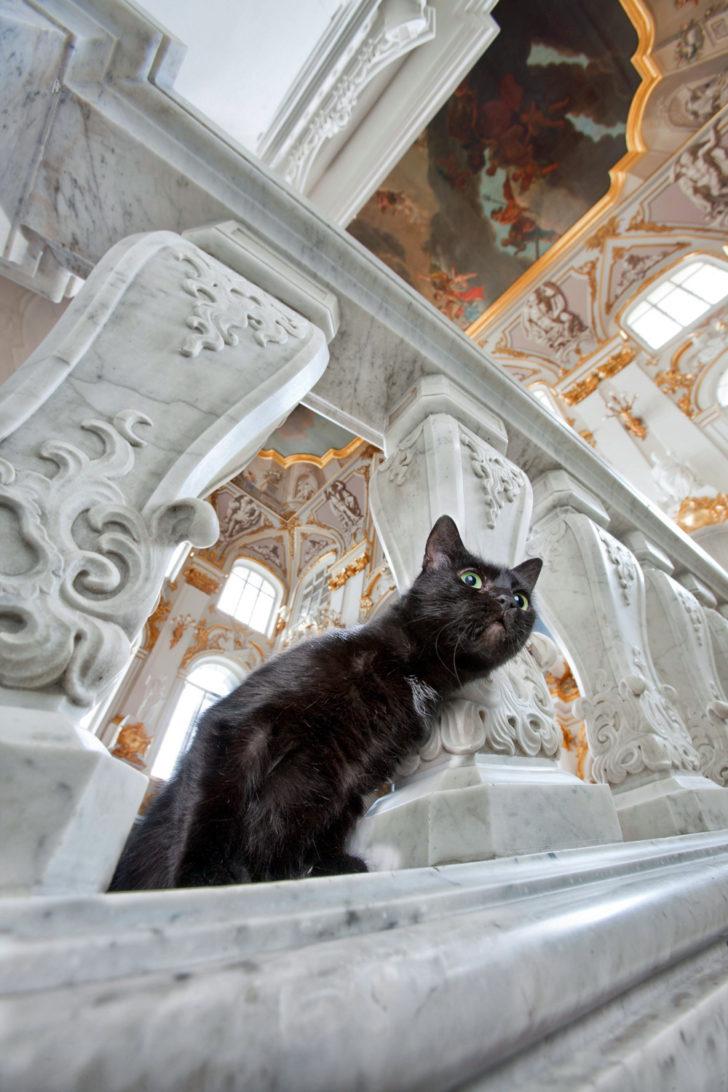 00-hermitage-cats-russia-st-petersburg-06-25-10-14