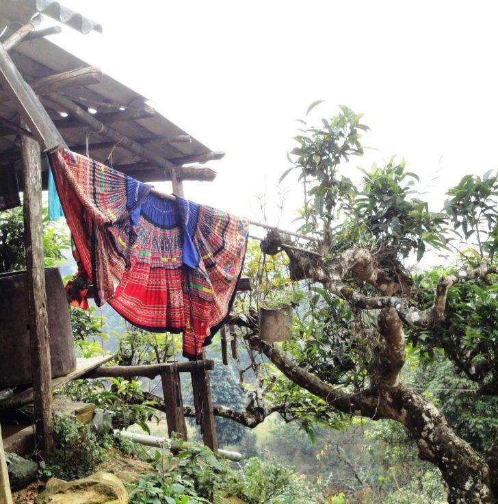 Théières sauvages hmong