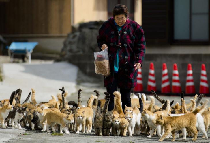 cat-island-food-japan-aoshima-4