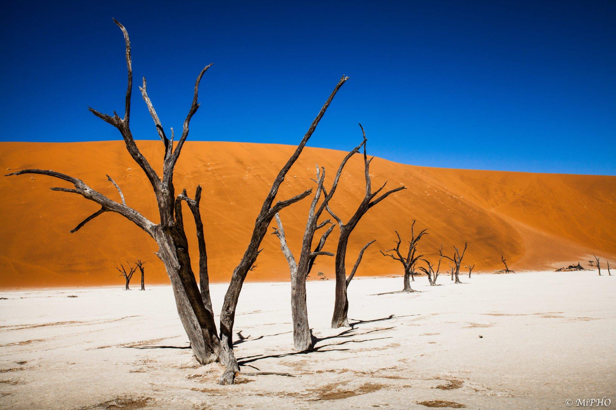 Namibie, Désert, Deadvlei