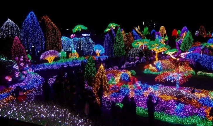 Corée, Séoul, festival lumière jardin matin calme