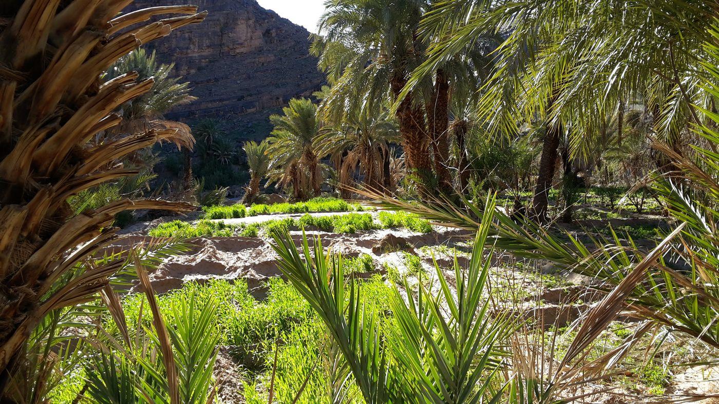 oasis de fint, Maroc