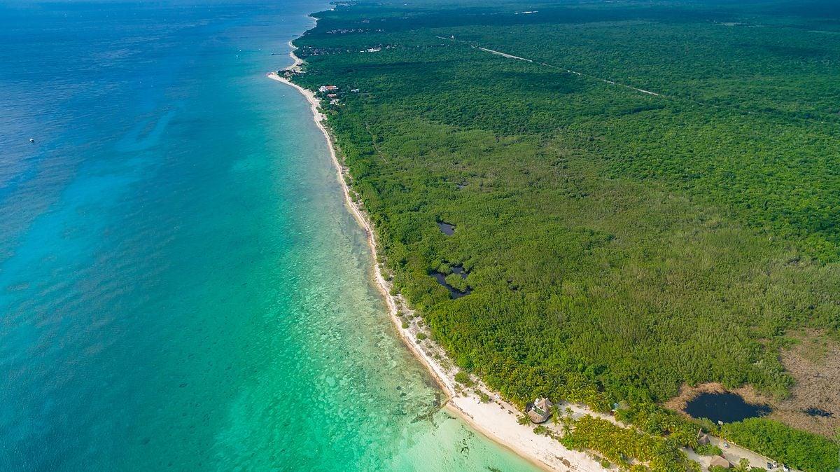 Île Cozumel, Mexique, corail