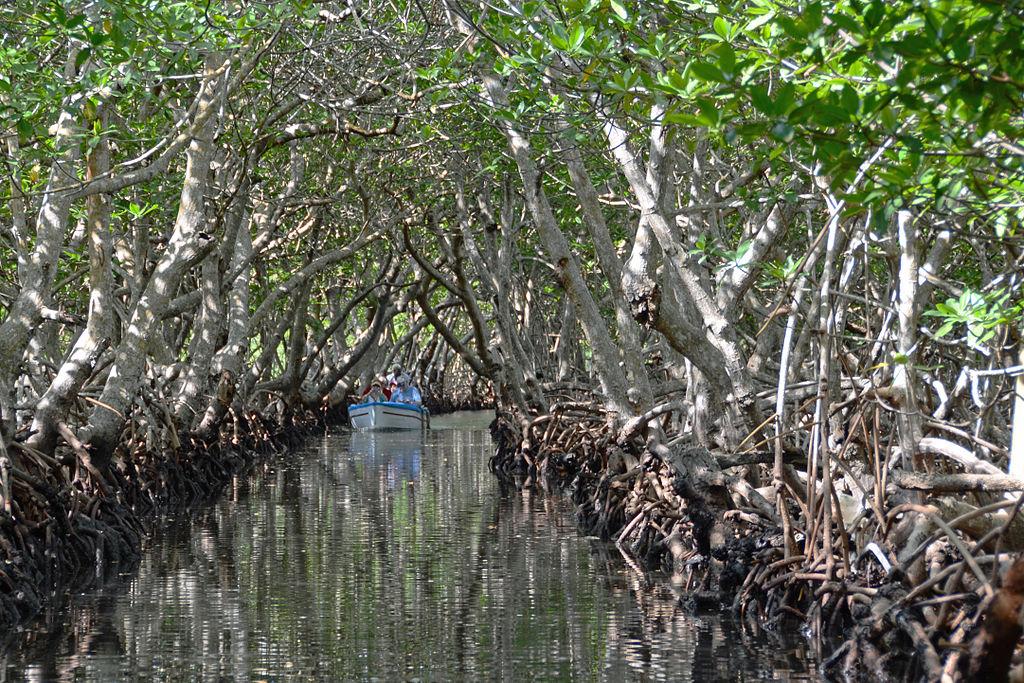 Mangrove île Roatán Honduras