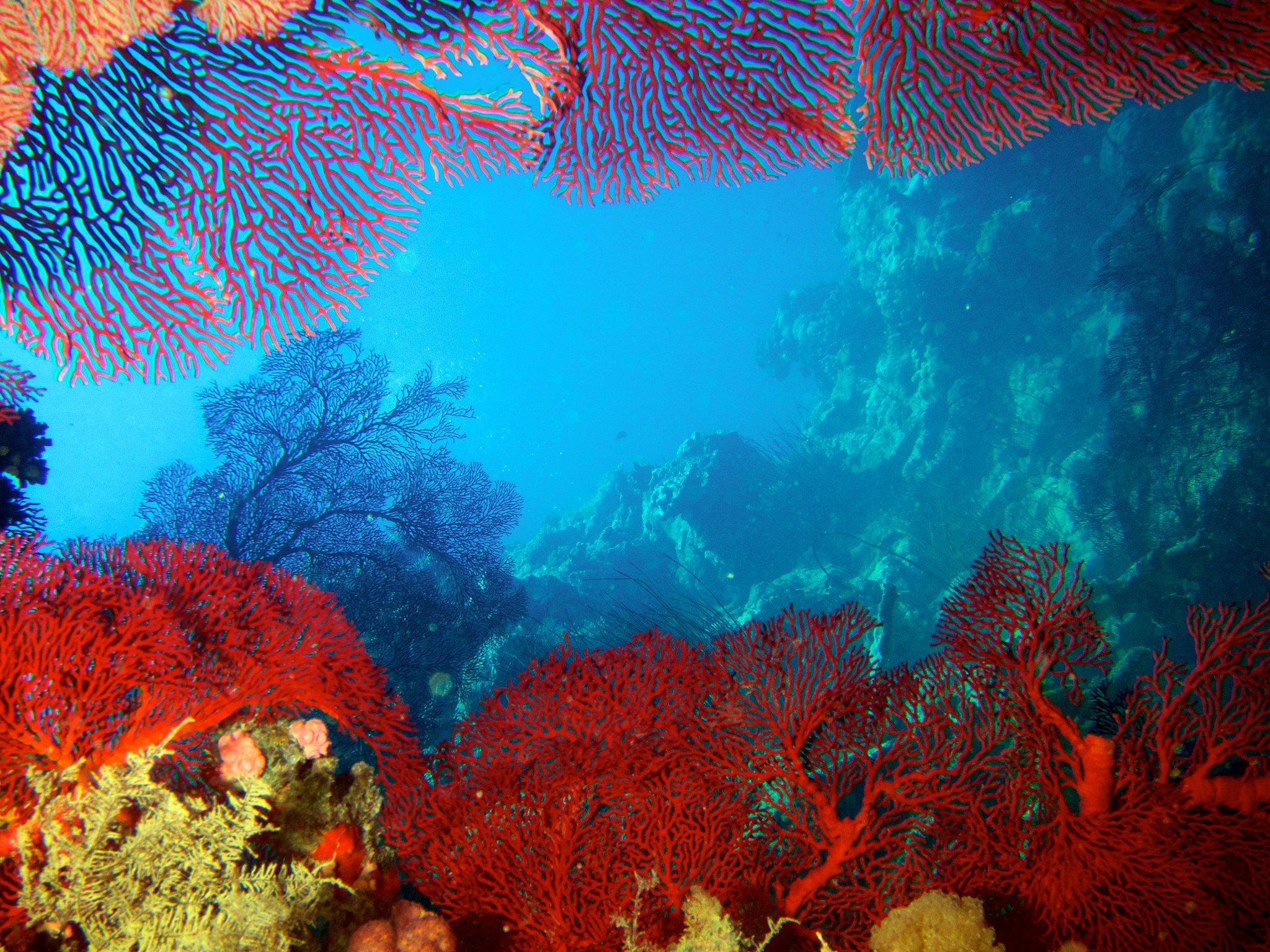 Nouvelle Calédonie, corail
