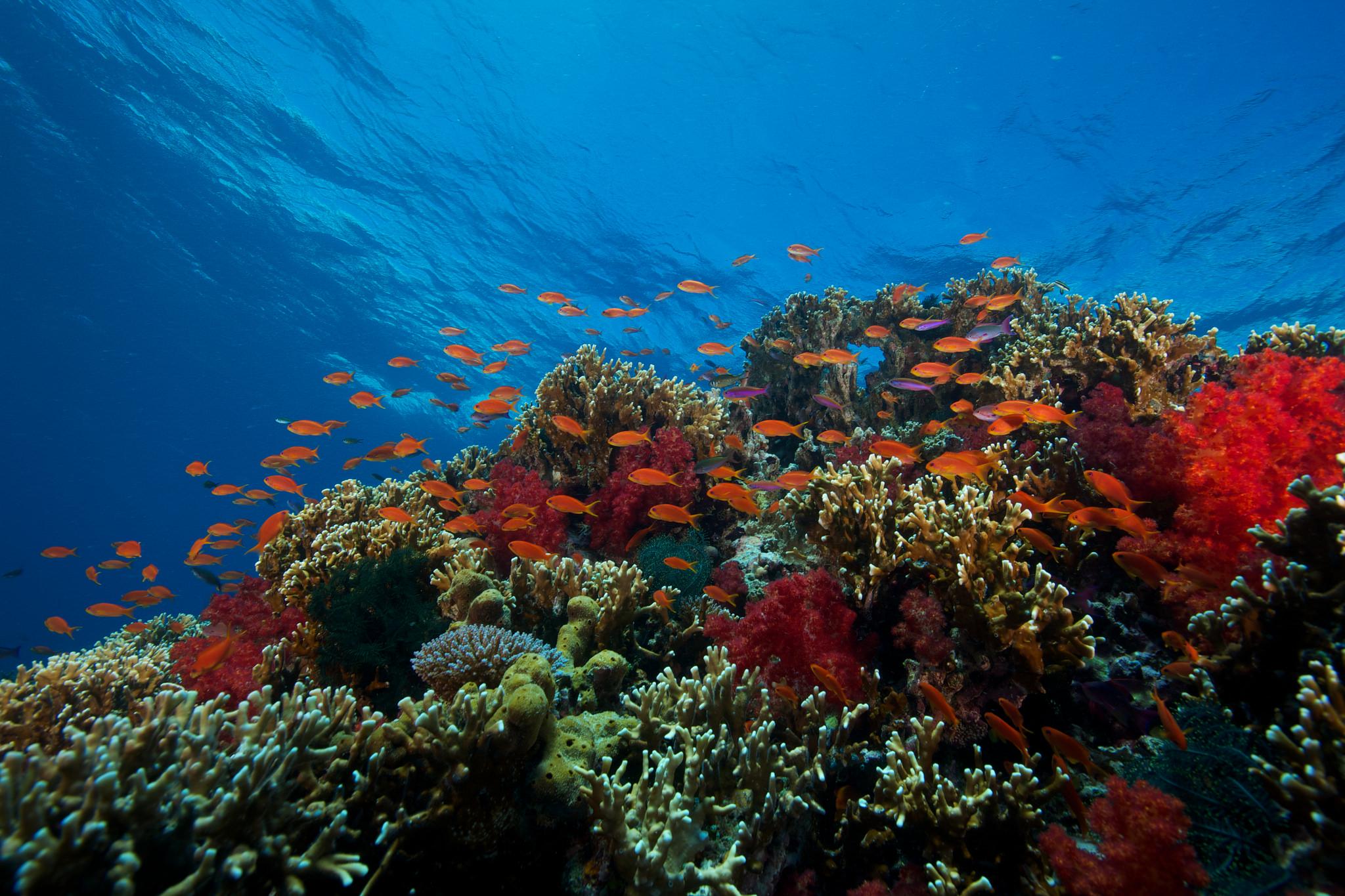 Île de Beqa, fidji