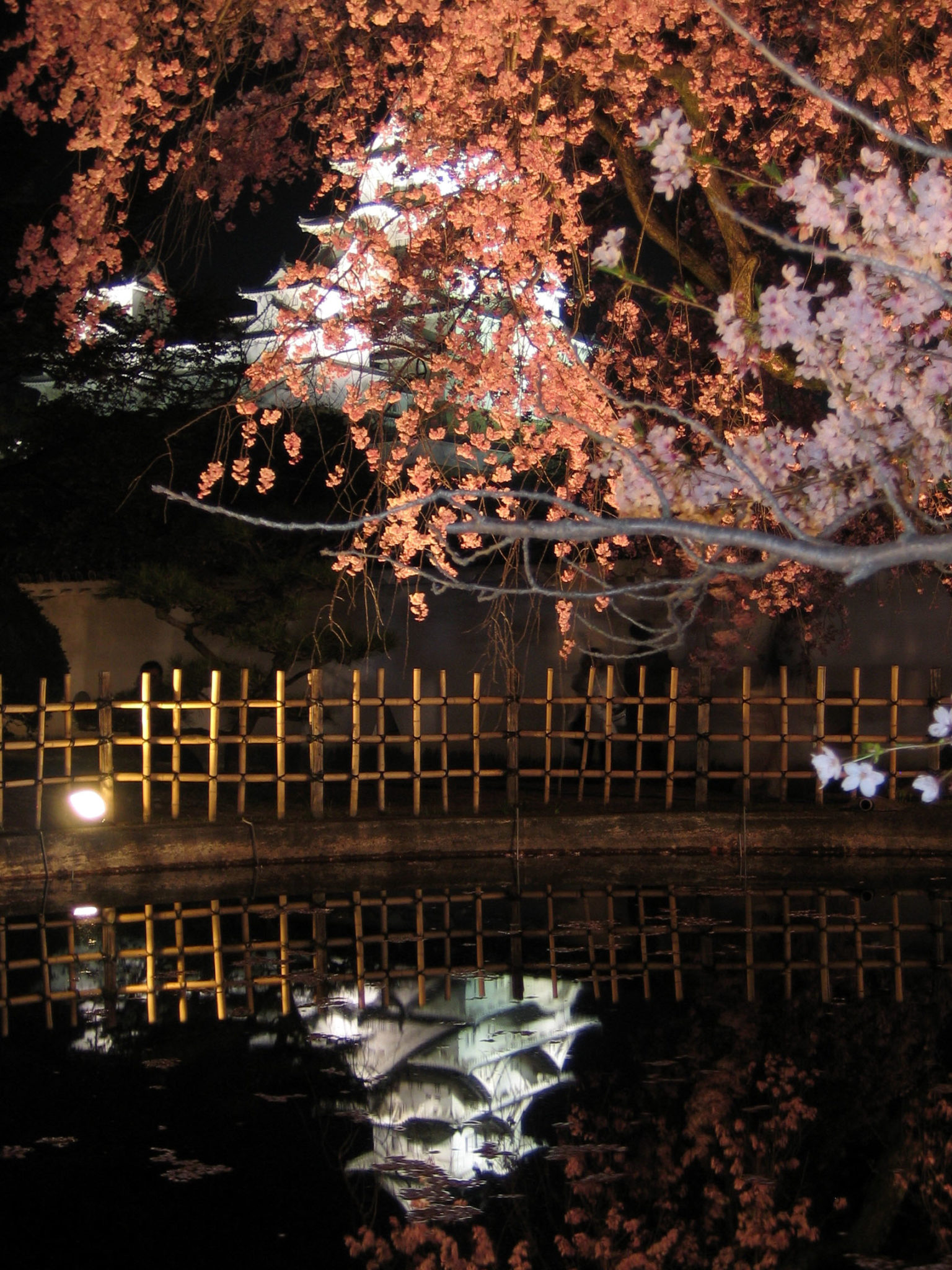 Himeji-jō_sakura cerisiers fleurs