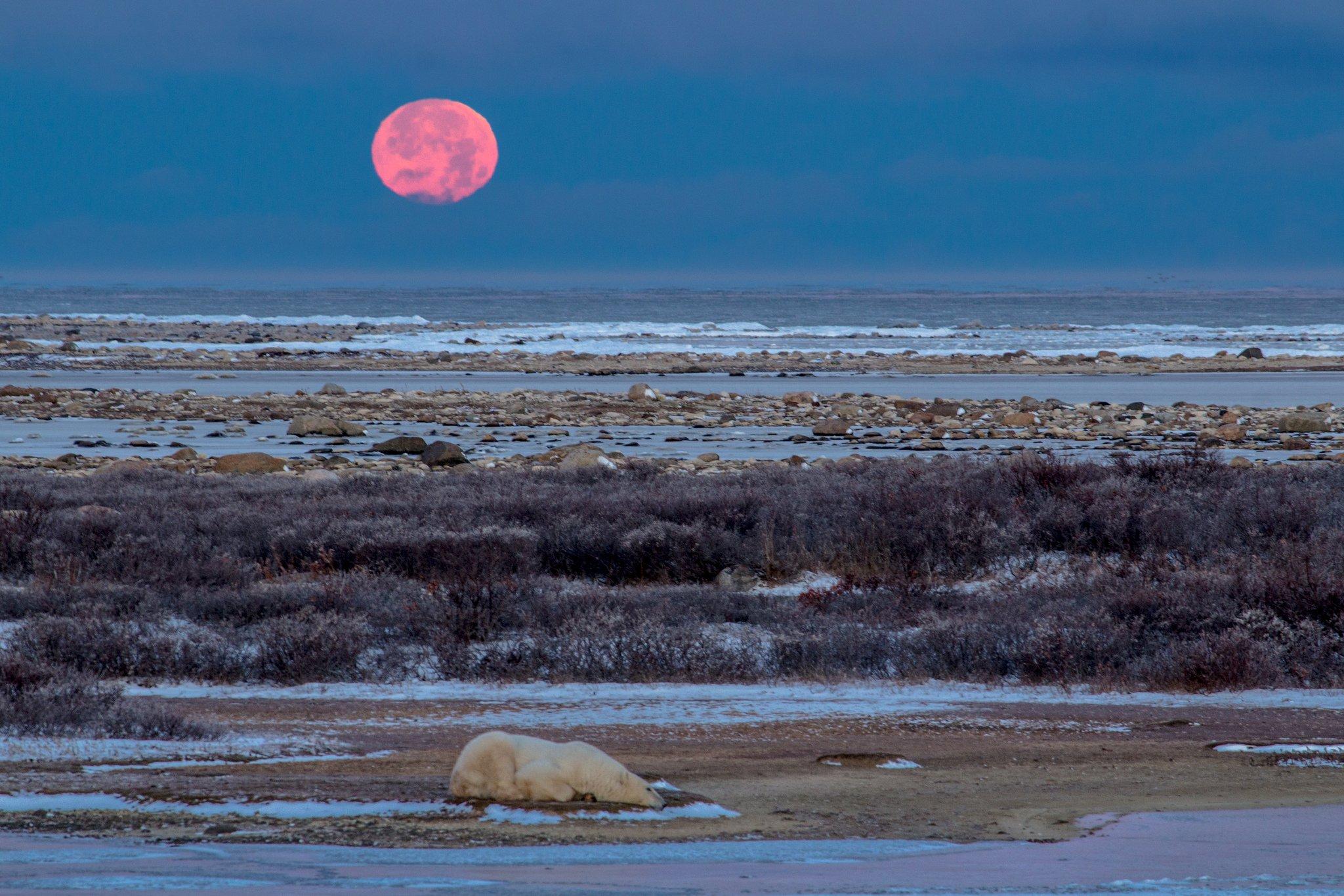 Wapusk, Manitoba, parc canada