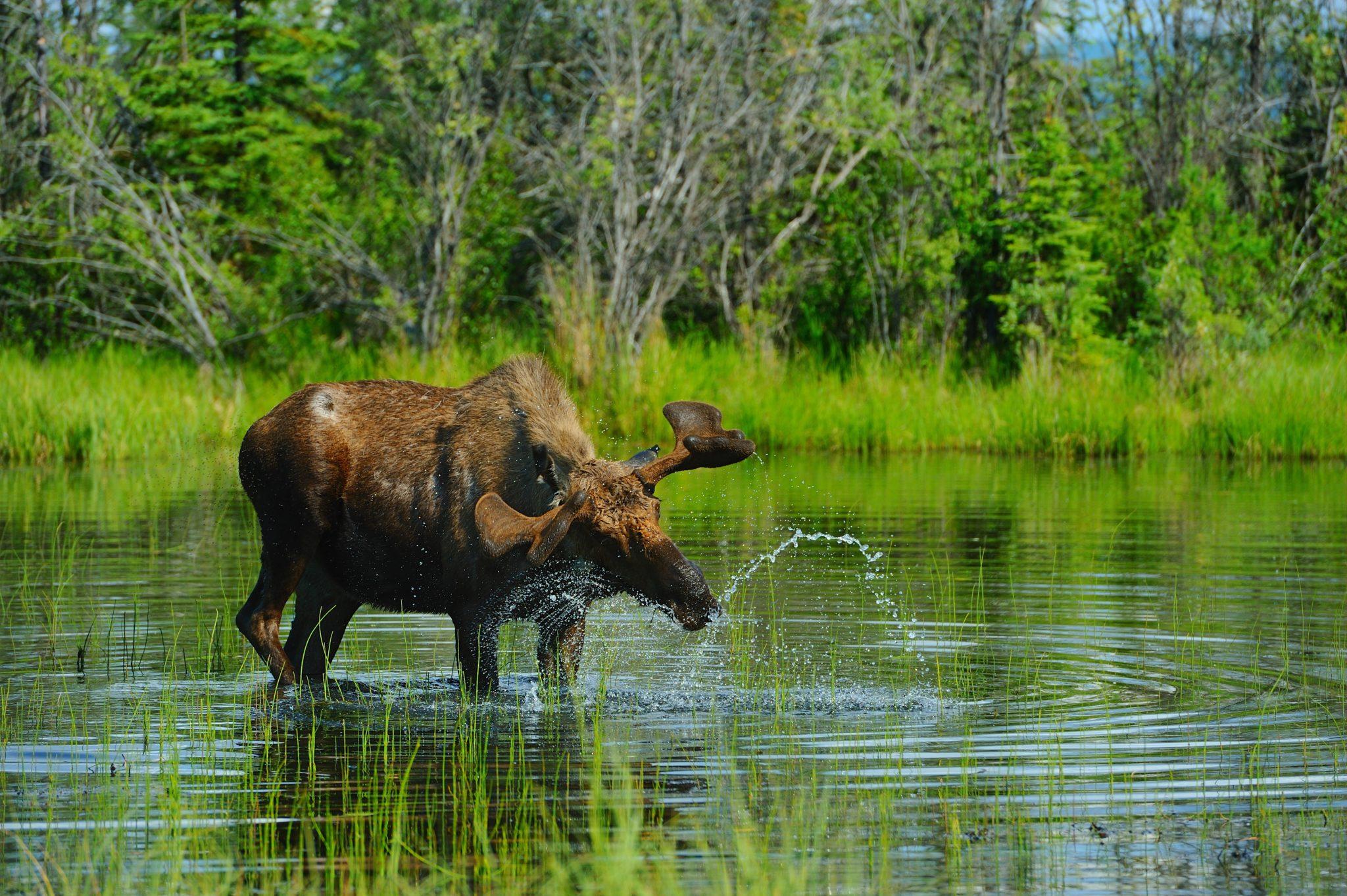 Vuntut, parc naturel canada