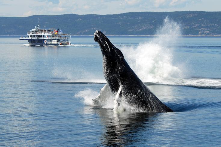 baleine parc marin canada