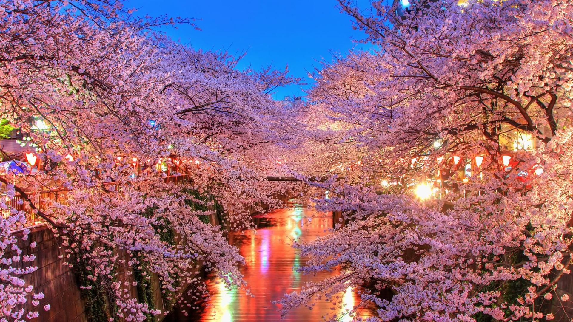 hanami-night