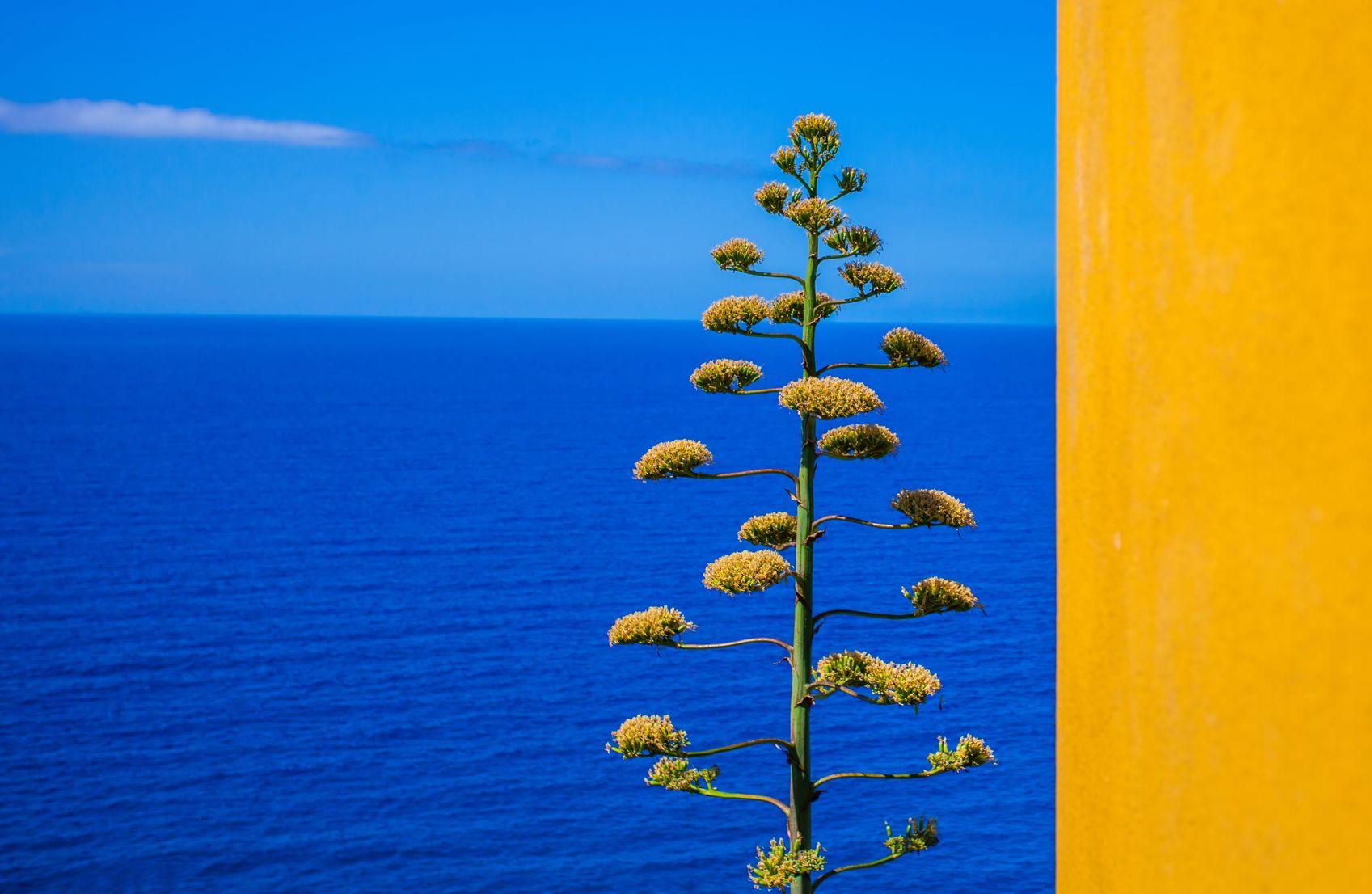 Corniglia, vue sur la mer