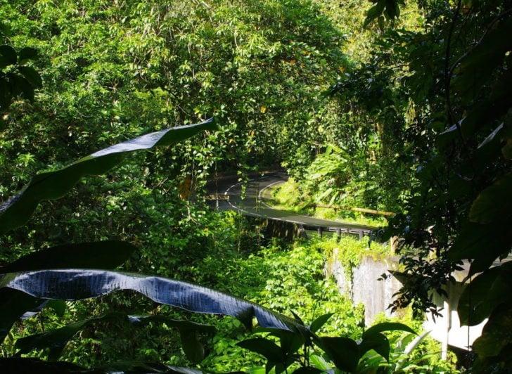La route de la Traversée en Guadeloupe
