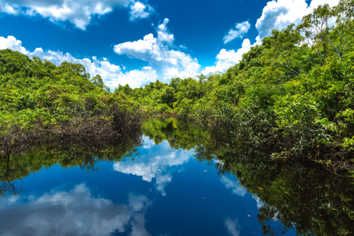 L'Amazone en Amazonie au Brésil
