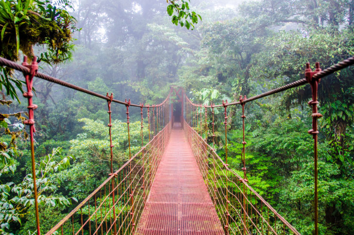 La forêt de nuages de Monteverde au Costa Rica