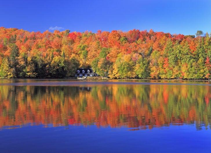 Forêt au bord d'un lac au Canada en automne