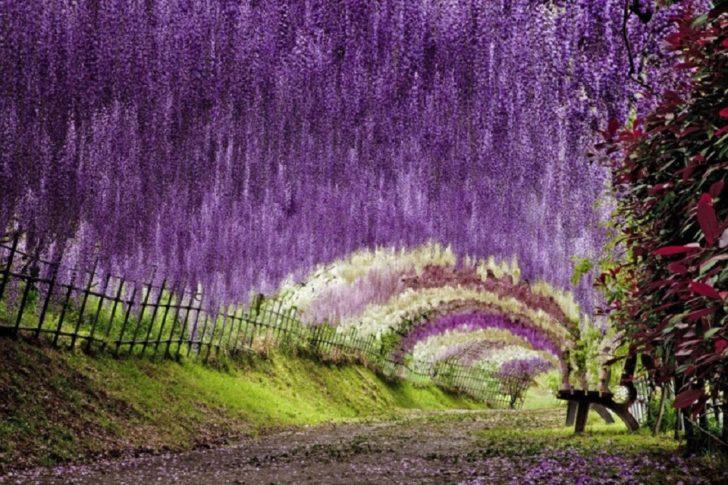 Le jardin Kawachi au Japon