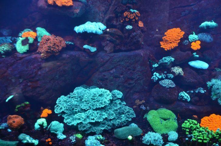 Aquarium des lagons à Nouméa