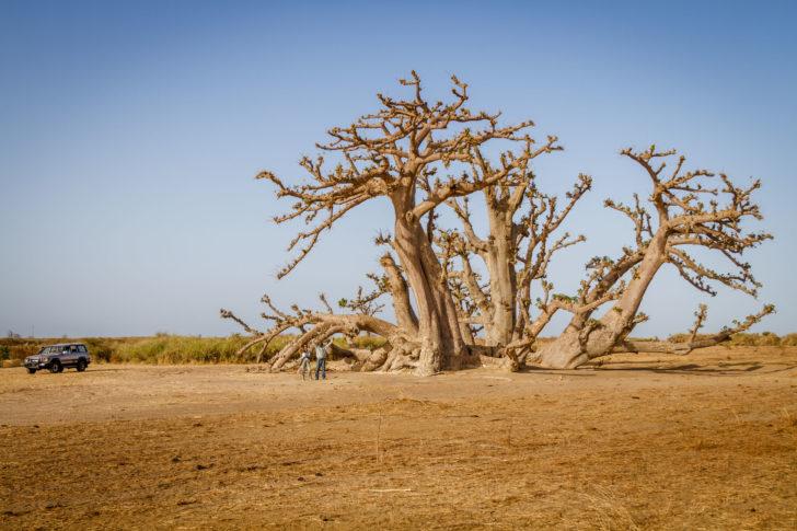 Sénégal, destination soleil de décembre