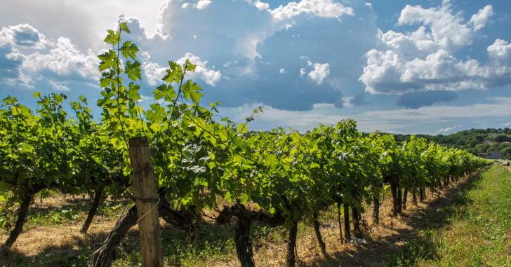 route des vignobles aoc ajaccio sartene et figari